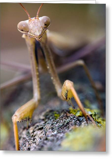 Creature Eating Greeting Cards - Mantis Greeting Card by Andre Goncalves