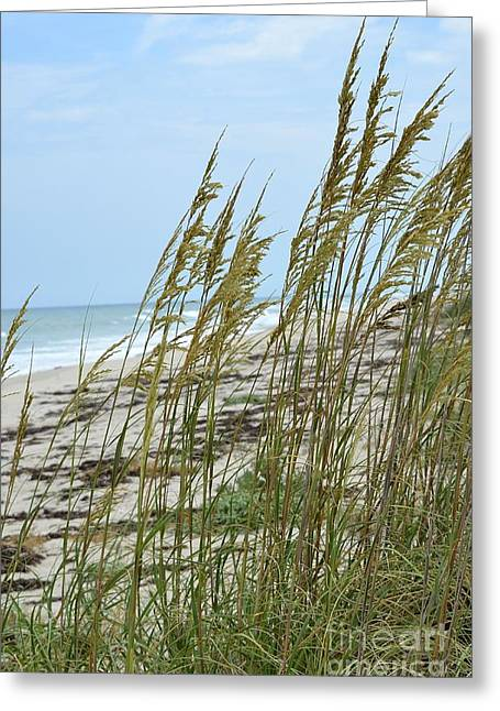 Palm Greeting Cards - Ocean Tides Series Greeting Card by Terry Troupe