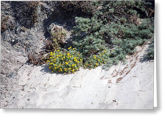 Pfeiffer Beach Greeting Cards - Pfeiffer Beach  Greeting Card by Harvey Barrison