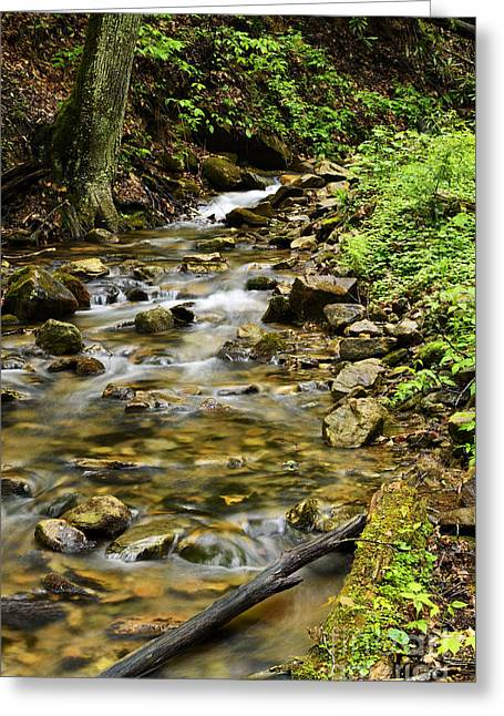 Rushing Mountain Stream Greeting Card by Thomas R Fletcher