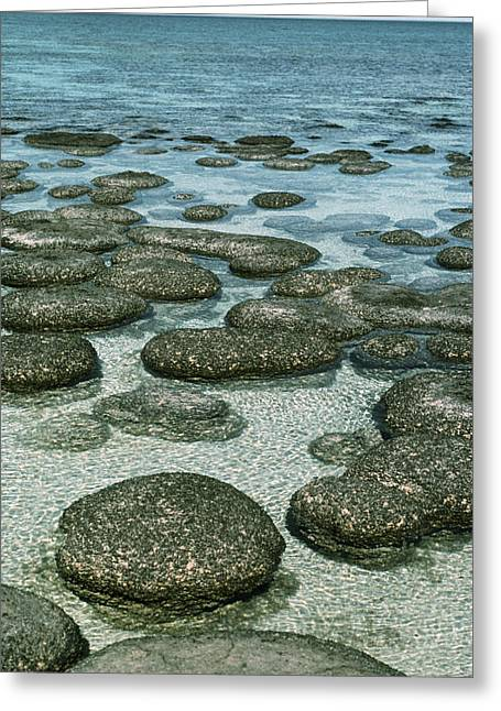 Algal Greeting Cards - Stromatolites Greeting Card by Georgette Douwma