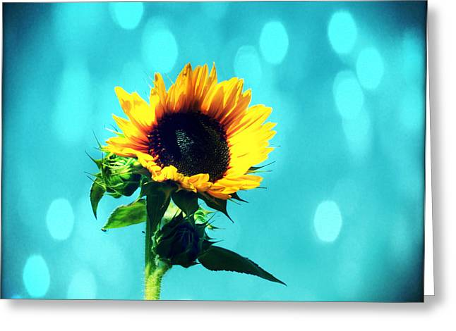 Yellow Sunflower Digital Greeting Cards - Sunflower Greeting Card by Cathie Tyler