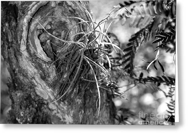 Tropical Greeting Cards - Centurions of the Forest Series Greeting Card by Terry Troupe