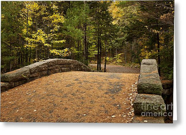 Carriage Road Greeting Cards - Acadia National Park Greeting Card by John Greim