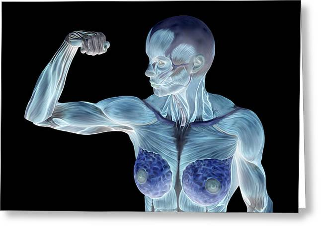 Negative Image Greeting Cards - Female Musculature Greeting Card by Friedrich Saurer