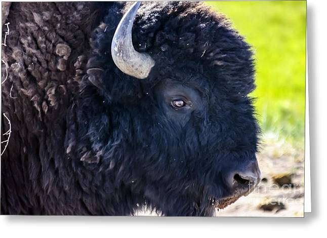 Sand Dunes National Park Greeting Cards - Great Sand Dunes Bison Greeting Card by Scotts Scapes