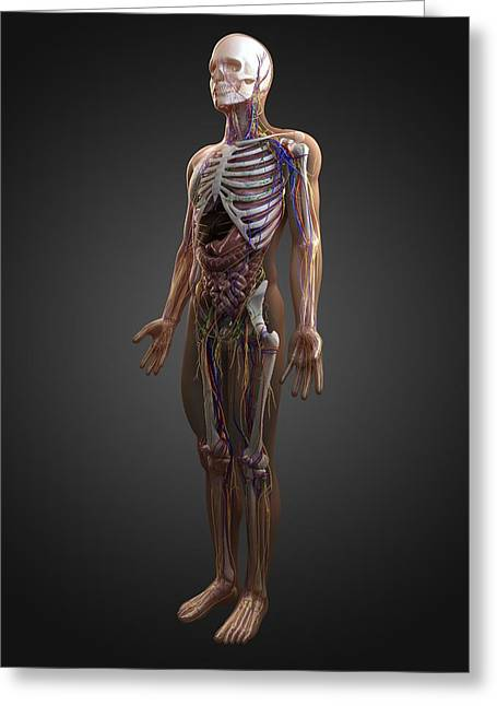Gi Greeting Cards - Human Anatomy, Artwork Greeting Card by Sciepro