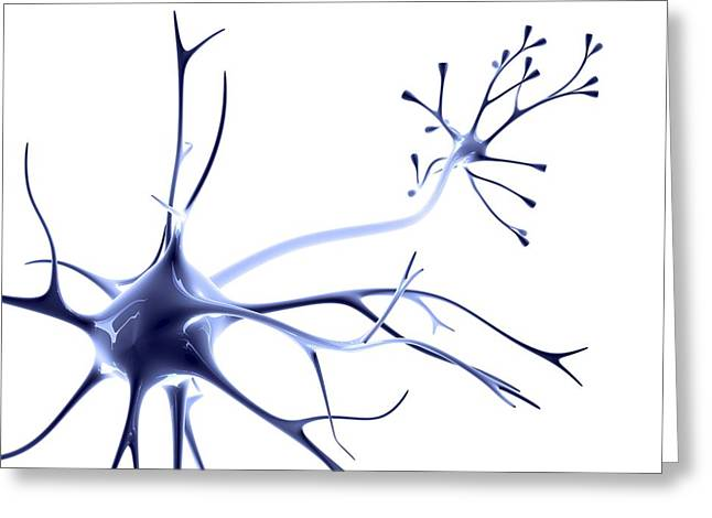 Biomedical Illustrations Greeting Cards - Nerve Cell Greeting Card by Pasieka