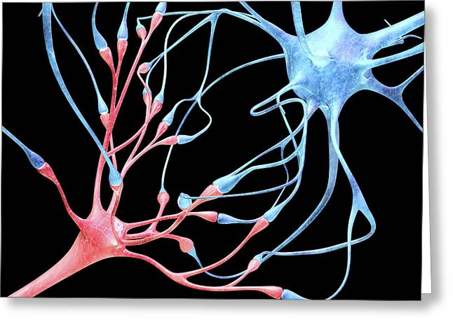 Interconnected Greeting Cards - Nerve Cells, Computer Artwork Greeting Card by Laguna Design