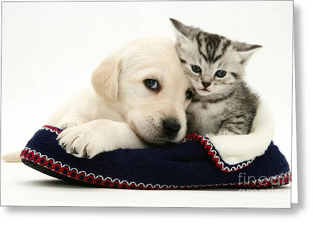 Dog Photographs Greeting Cards - Puppy And Kitten Greeting Card by Jane Burton