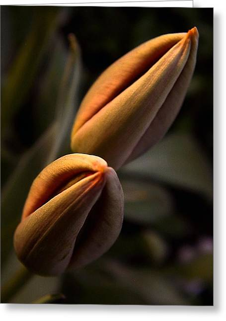 Shower Head Greeting Cards - Tulips Greeting Card by Odon Czintos