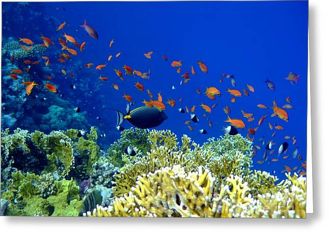 Surgeonfish Greeting Cards - Underwater landscape Greeting Card by MotHaiBaPhoto Prints