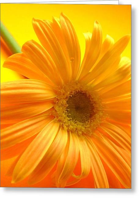 7321-007 Greeting Card by Kimberlie Gerner