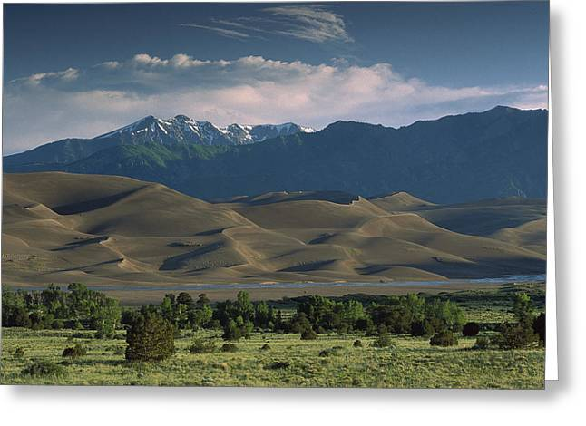 Sangre De Cristo Mountains Greeting Cards - 750 Foot Tall Sand Dunes Rise Greeting Card by Tim Fitzharris