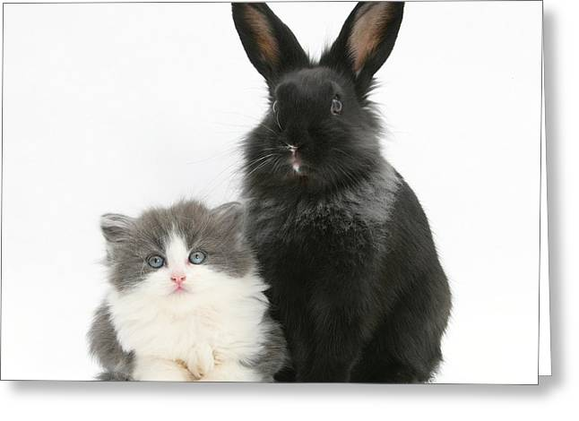 House Pet Greeting Cards - Kitten And Rabbit Greeting Card by Mark Taylor