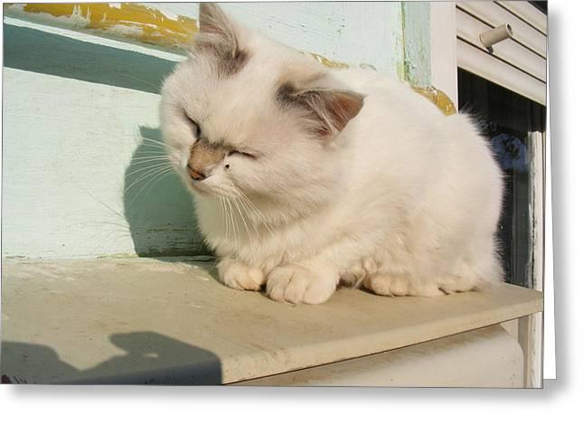 Lavers Greeting Cards - Cat Greeting Card by Bogdan Floridana Oana
