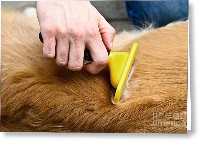 Furry Coat Greeting Cards - Dog Grooming Greeting Card by Photo Researchers, Inc.