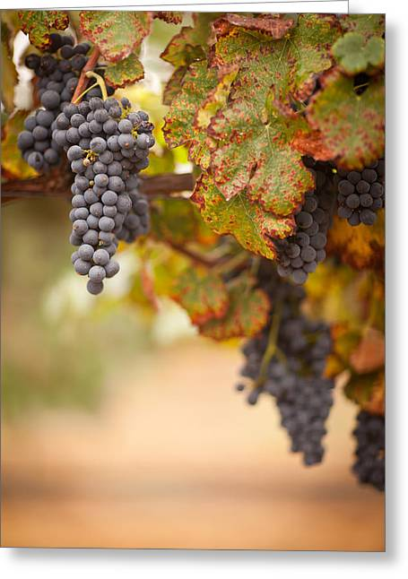 Viticulture Greeting Cards - Grapes on the Vine Greeting Card by Andy Dean