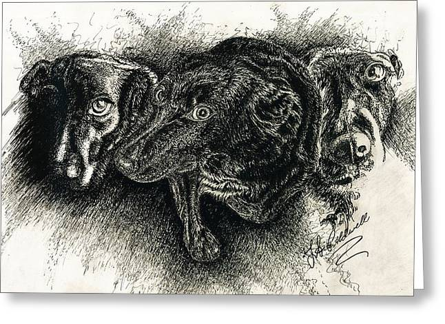 Pencil Drawings Of Pets Greeting Cards - Hershey Greeting Card by Jac  Jac