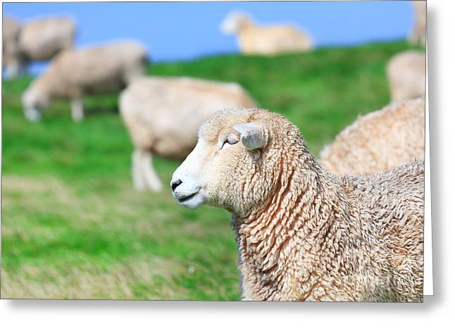 Green Day Greeting Cards - Sheeps Greeting Card by MotHaiBaPhoto Prints