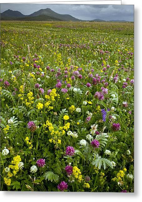 Outer Hebrides Greeting Cards - Wildflower Meadow Greeting Card by Bob Gibbons