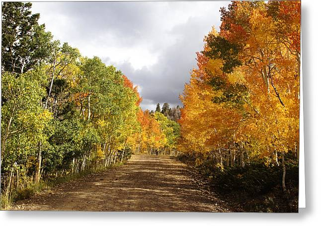 Autumn Photographs Greeting Cards - Rocky Mountain Fall Greeting Card by Mark Smith