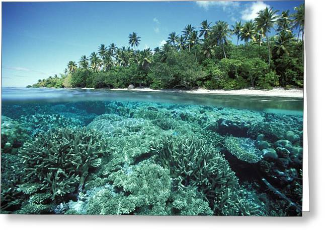 Hard Life Greeting Cards - Micronesia Marine Life Greeting Card by Dave Fleetham - Printscapes