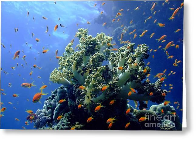 Snorkel Greeting Cards - Underwater landscape Greeting Card by MotHaiBaPhoto Prints