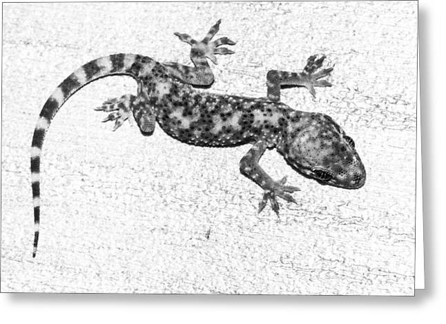 Gecko Print Greeting Cards - A baby lizard - Mediterranean Gecko in black and white Greeting Card by Ellie Teramoto
