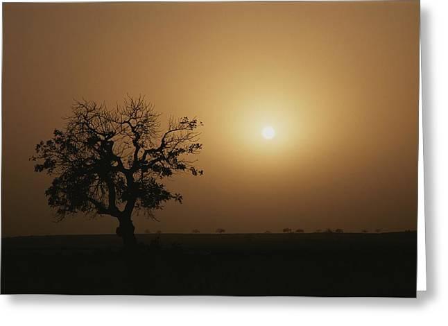 A Baobab Tree Adansonia Digitata Greeting Card by Bobby Model