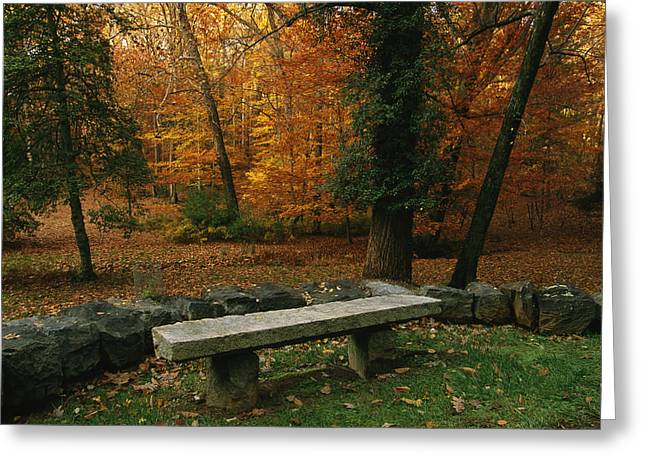 Park Scene Greeting Cards - A Bench In A Wooded Setting Of Trees Greeting Card by Melissa Farlow