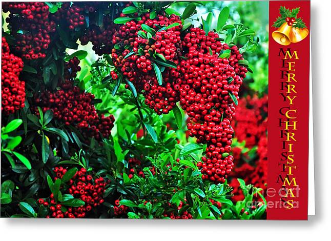 Christmas Greeting Photographs Greeting Cards - A Berry Merry Christmas Greeting Card by Kaye Menner