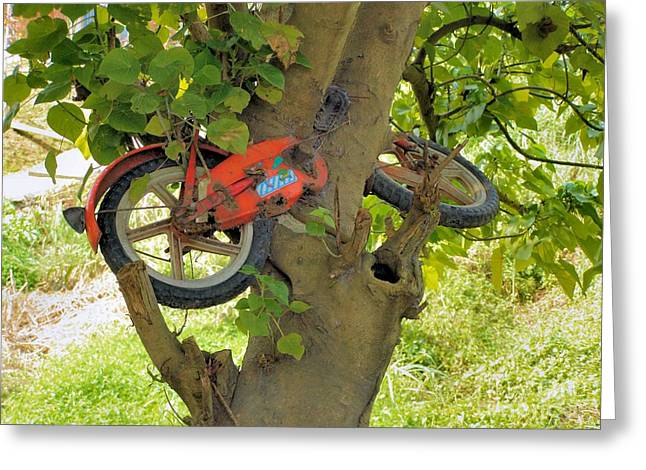 """""""strange Trees"""" Greeting Cards - A bike growing in a tree Greeting Card by Kathy Daxon"""