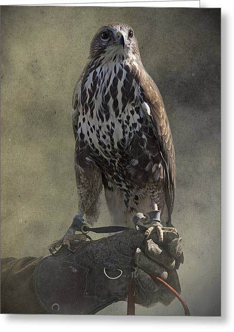 Majestic Falcon Greeting Cards - A Bird In The Hand Greeting Card by Ethiriel  Photography