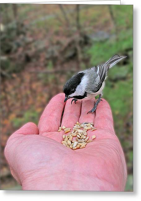 Feeding Birds Greeting Cards - A Bird in the Hand Greeting Card by Larry Landolfi
