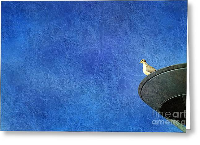 Mourning Dove Greeting Cards - A Birds Eye View Greeting Card by Andee Design