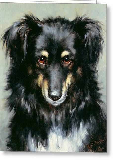 Black And Tan Greeting Cards - A Black and Tan Collie Greeting Card by Robert Morley