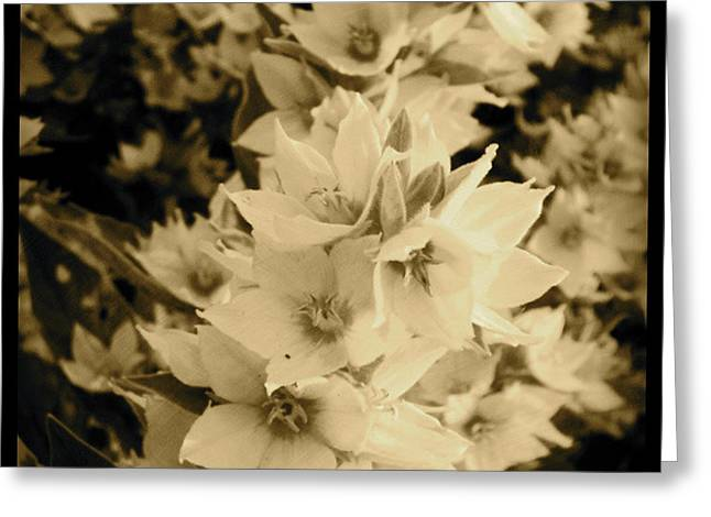 Sepia Flowers Greeting Cards - A bloom of sepia Greeting Card by Trish Hale