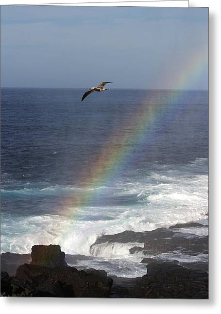 A Blue Footed Booby Soars Greeting Card by Ralph Lee Hopkins