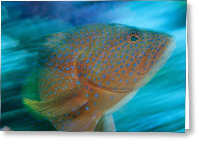 Spotted Blue Fish Greeting Cards - A Blue-spotted Grouper Warding Greeting Card by Tim Laman