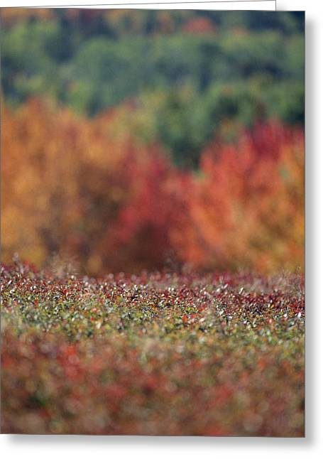 A Blueberry Patch Alongside Maines Greeting Card by Nick Caloyianis