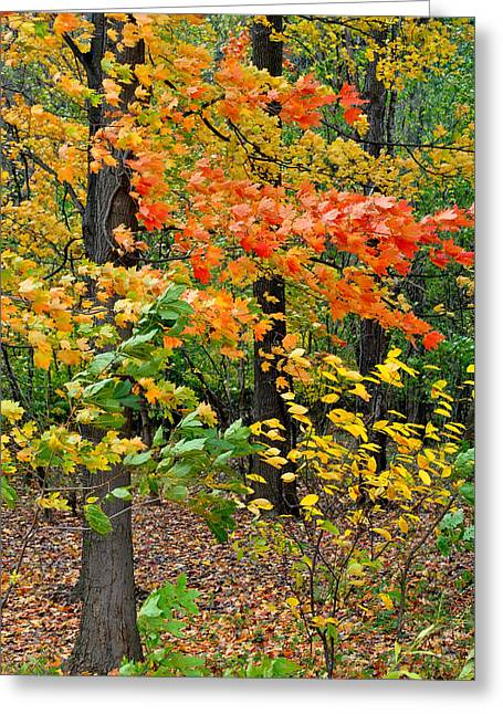 Blustery Greeting Cards - A Blustery Autumn Day Greeting Card by Frozen in Time Fine Art Photography