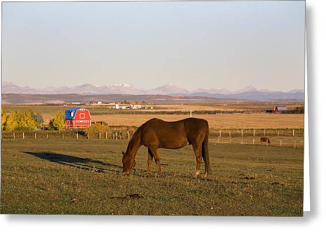 A Brown Horse Grazing In A Field In Greeting Card by Michael Interisano