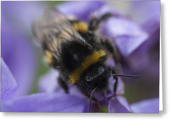 Beeswax Greeting Cards - A Busy Bee Greeting Card by Zoe Ferrie