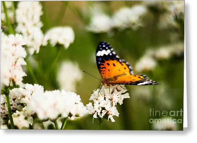Sucking Greeting Cards - A Butterfly Affair Greeting Card by Syed Aqueel