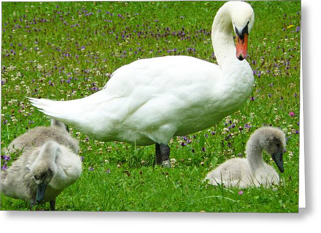 Caring Mother Greeting Cards - A Caring Mother Greeting Card by Daniel Csoka