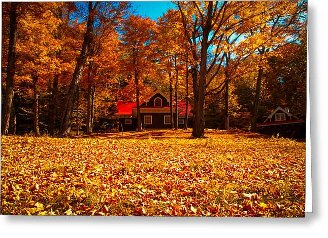 Hdr Landscape Greeting Cards - A Carpet of Orange Leaves Greeting Card by Chantal PhotoPix
