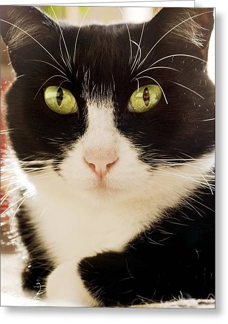 Felis Silvestris Catus Greeting Cards - A Cat Greeting Card by Ben Welsh