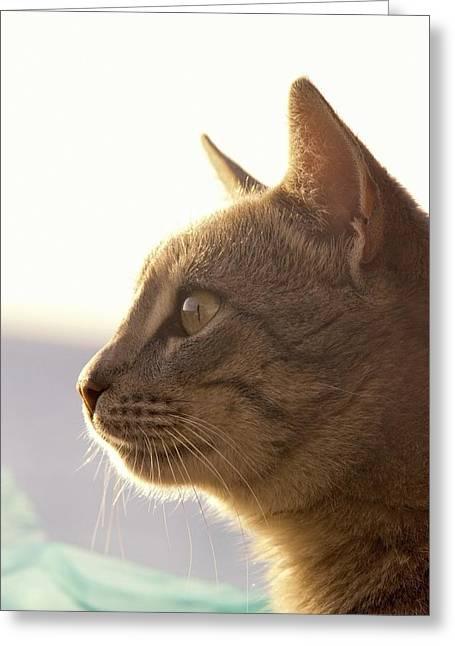 Felis Silvestris Catus Greeting Cards - A Cat Watching Greeting Card by John Short