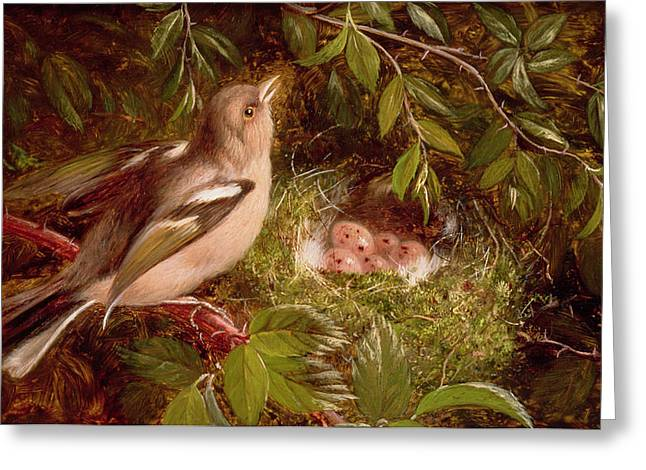 Undergrowth Greeting Cards - A Chaffinch at its Nest Greeting Card by William Hughes